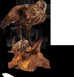 obj-roofvogel-MG_7955-02